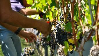 Weinbauern in Gebenstorf