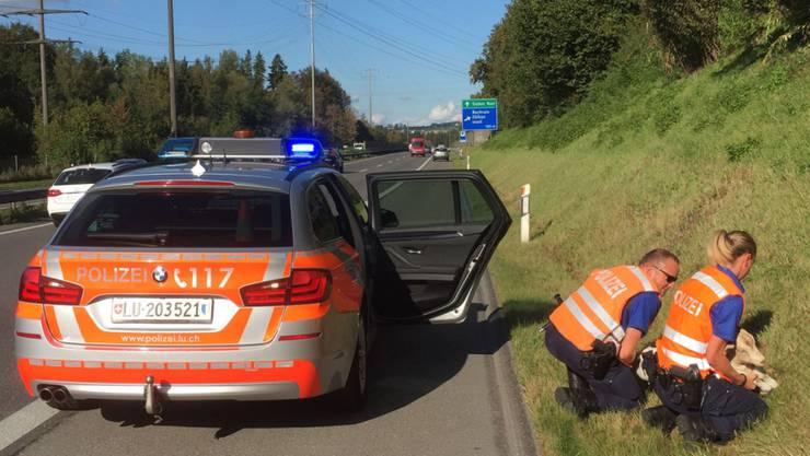 Ein tierischer Einsatz: Eine Patrouille der Luzerner Polizei machte am Montag an der Autobahn A14 in Buchrain eine entlaufene Ziege dingfest.