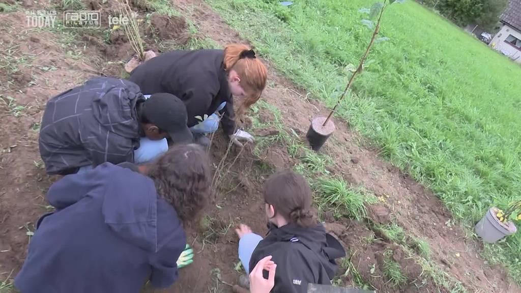 Gymi-Schüler packen auf dem Bauernhof mit an