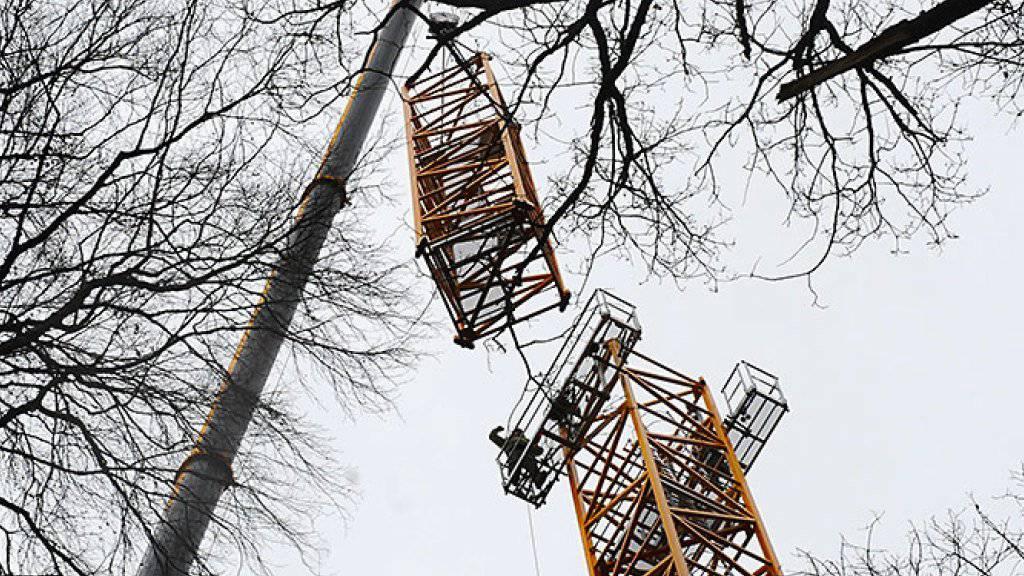 Uni Basel bereitet Klimaexperiment im Wald vor