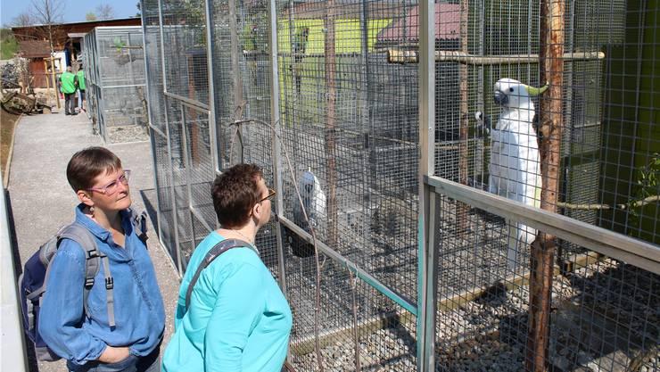 Für die Besucher gibt es im Vogelpark jedes Mal etwas Neues zu entdecken.kpf