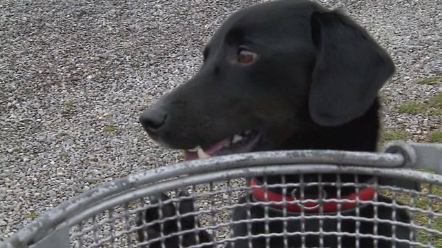 Anti-Littering-Hund