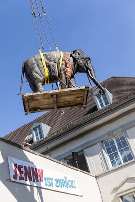 Die ausgestopfte Elefantendame auf ihrem Weg nach oben.