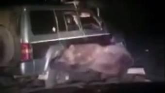 In Russland steckte ein Bär unter einem SUV fest. Er konnte sich aber befreien und ging zum Angriff über.