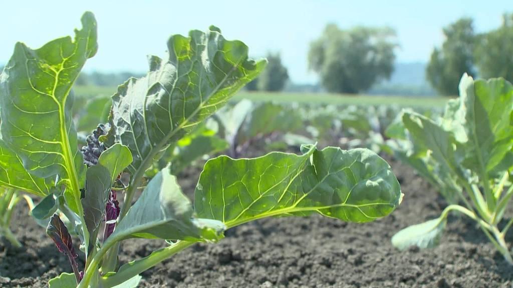 Pflanzenschutzmittel-Debatte im Ständerat