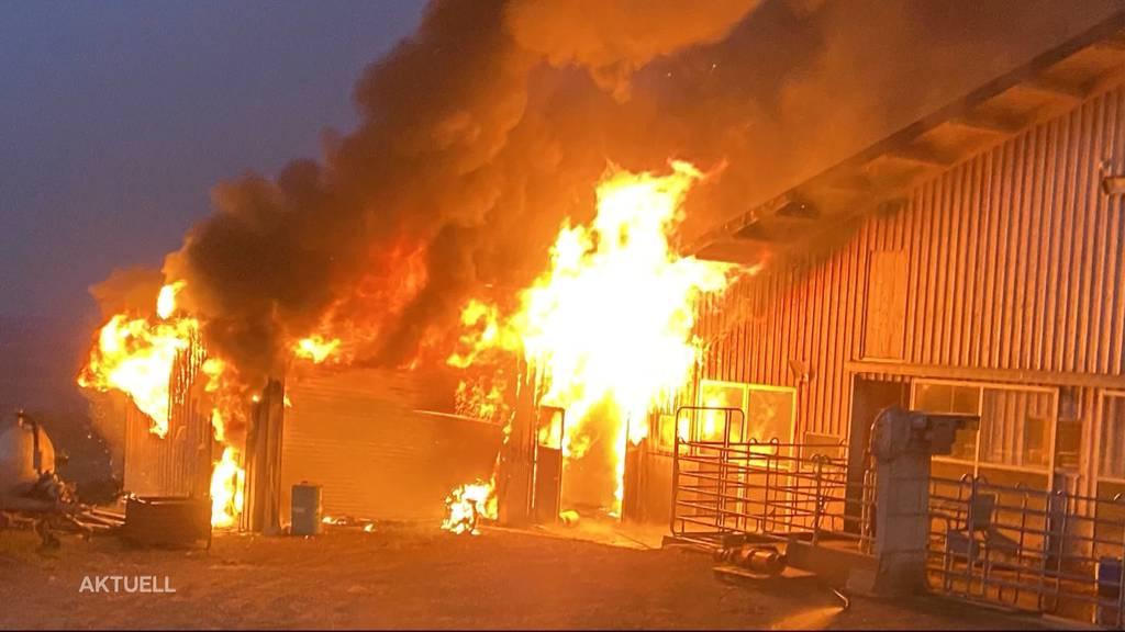 Bauernhofbrand in Beinwil: 16-Jähriger verletzt, 60 Kühe bleiben verschont