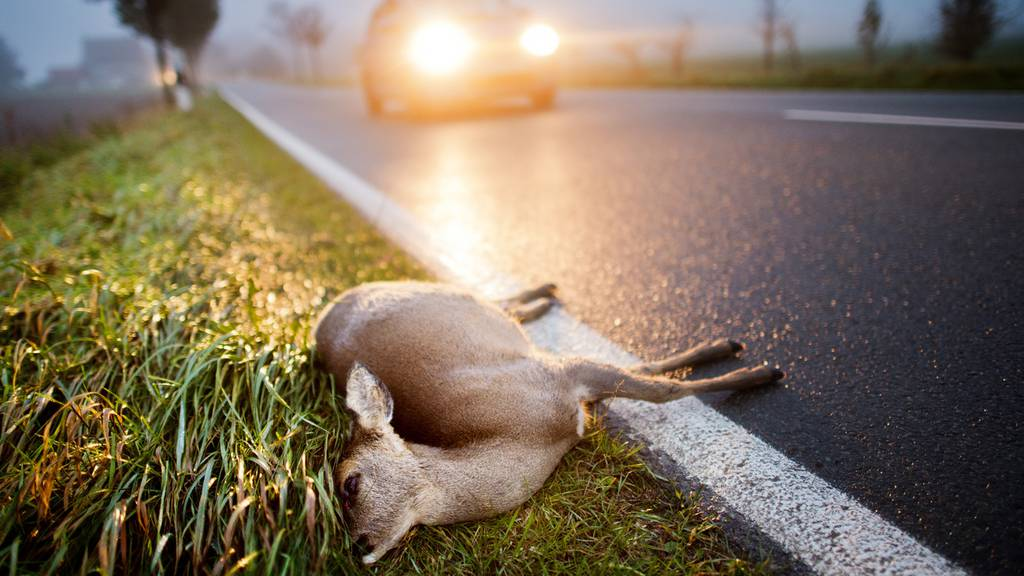 Wildtierunfälle marc