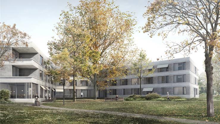 Die alten Bäume im Park sollen auch mit dem Neubau des Alterszentrums Rinau Park bestehen bleiben. Visualisierung/Zvg