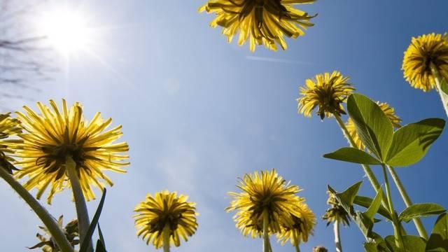 Der Frühling 2012 hält bereits im März Einzug. (Symbolbild)