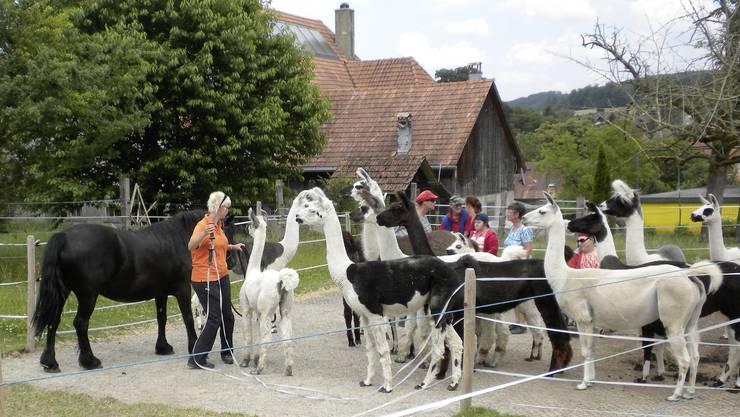 Tanja Bandi führt die Tiere zu den Gästen.