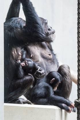 Die Gruppe hat das Baby gut aufgenommen.