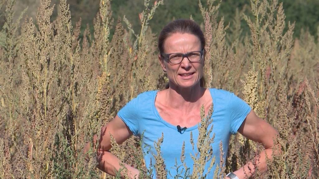 Heimisch exotisch: Quinoa