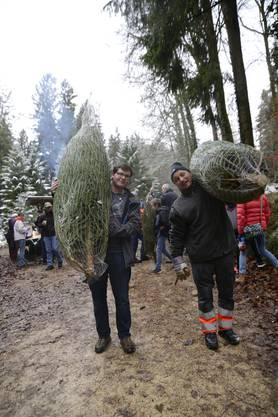 Abtransport der erbeuteten Weihnachtsbäume.