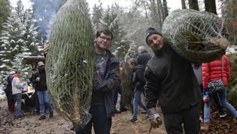 Weihnachtsbäume in Schnottwil