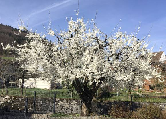 Richtig Frühling whouu---!..!