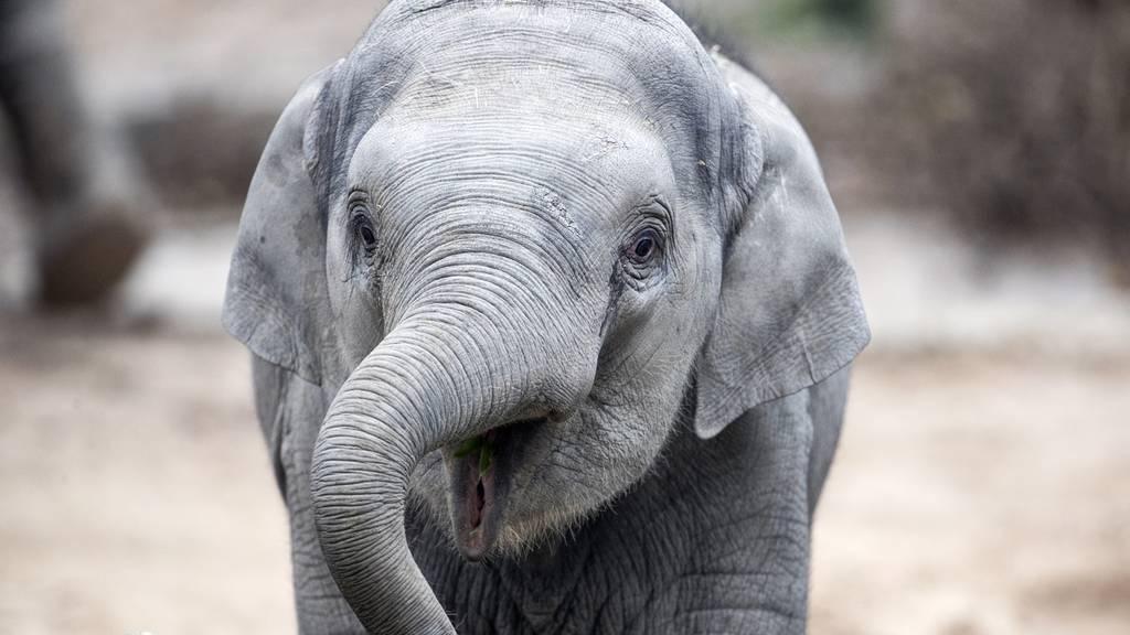 Roboter sollen von Elefanten-Bewegungen lernen