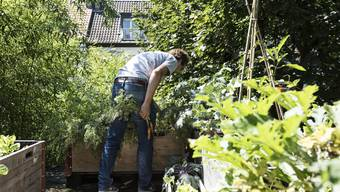 Basel 14.8.2017 - Urban Gardening. Photo by Roland Schmid