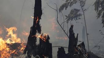 """Die brasilianische Regierung will angesichts der verheerenden Waldbrände im Amazonasgebiet Brandrodungen in der Trockenzeit verbieten. """" (Foto: Eraldo Peres/AP)"""