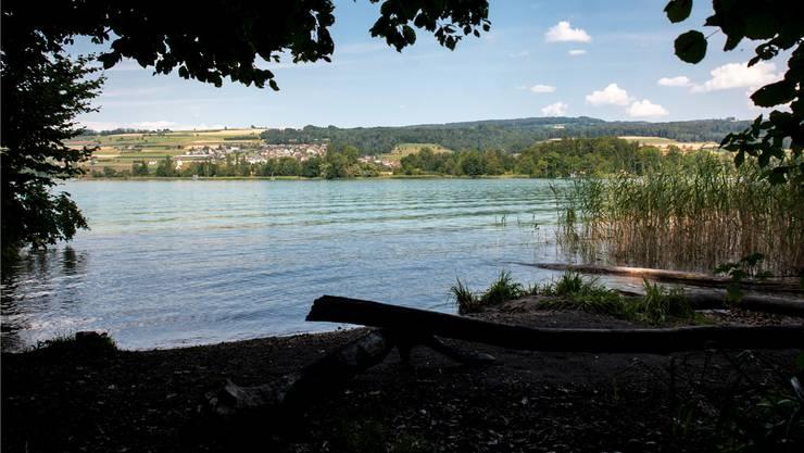 In der Nähe der Gemeindegrenze zwischen Mosen und Beinwil am See hat der Fischer den Kaiman beobachtet. Bild: Stefania Telesca
