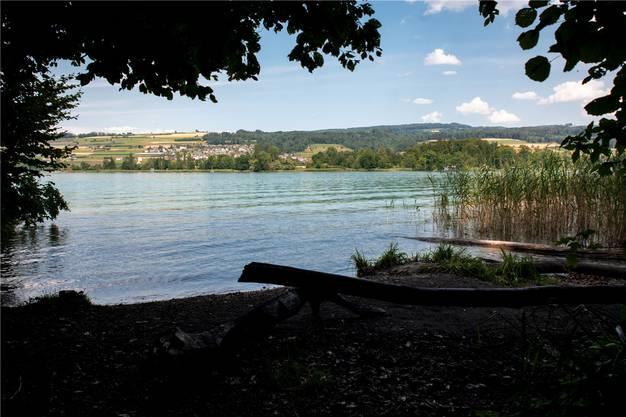 In der Nähe der Gemeindegrenze zwischen Mosen und Beinwil am See will der Fischer den Kaiman beobachtet haben.