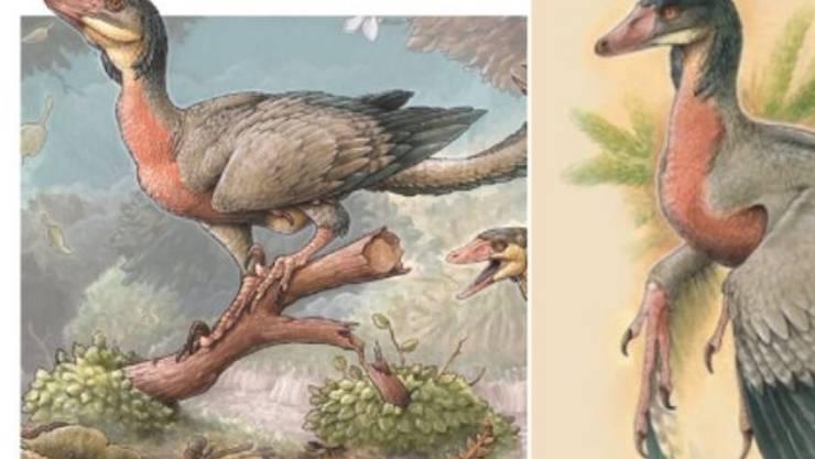 Rekonstruktion des fleischfressenden geflügelten Sauriers Overoraptor chimentoi. Er soll Forschern neue Erkenntnisse über die Entwicklung der Vögel liefern (zVg)