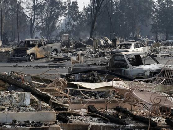 Vom Feuer zerstörte Häuser und Fahrzeuge in Santa Rosa.