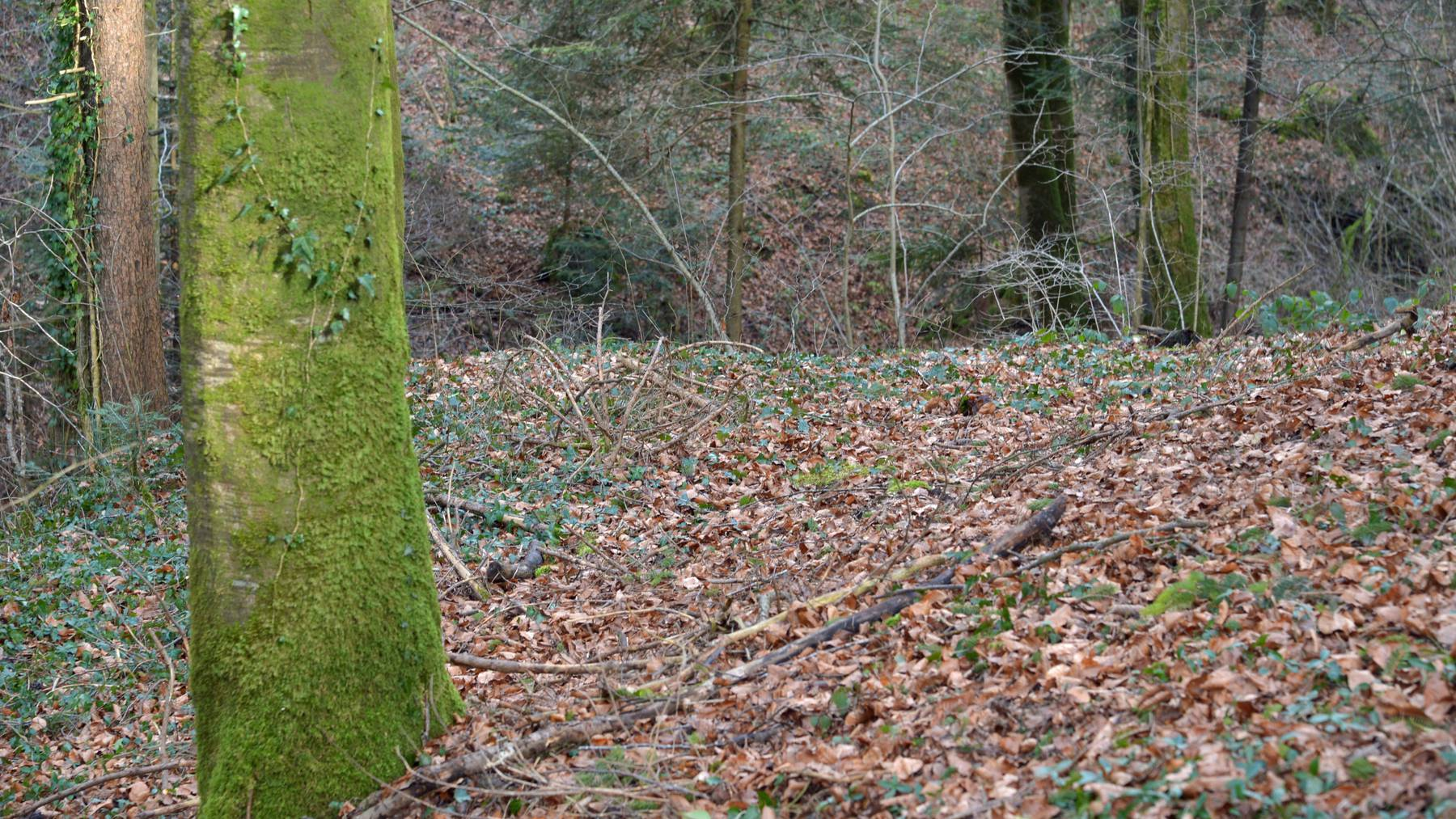 In diesem Waldstück wurde die tote Frau gefunden.