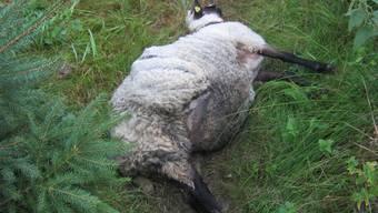 Zwei Tiere können vom Schafzüchter nur noch tot geborgen werden. Das Unbegreifliche: Offenbar haben auch die Hundebesitzer die Schafe einem qualvollen Tod überlassen.