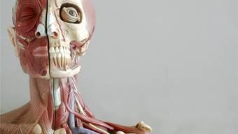 Engpass bei Patienten und Leichen:  Während die Zahl der Studenten steigt, verkürzt sich die Aufenthaltsdauer der Patienten im Spital.