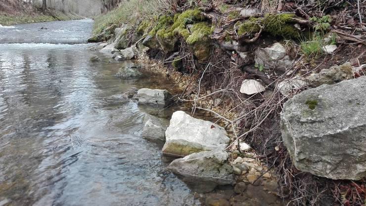 Das Ufer der Dünnern in Matzendorf muss saniert werden. Aber wie? Darüber wurde diskutiert.