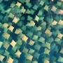 Bei diesem Drohnen-Video aus Australien sollte man zweimal hinschauen. Denn was auf den ersten Blick wie ein Haufen Blätter im Meer aussieht, ist ein Schwarm Kuhnasenrochen.