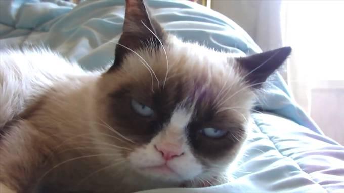 Die Welt trauert um «Grumpy Cat»