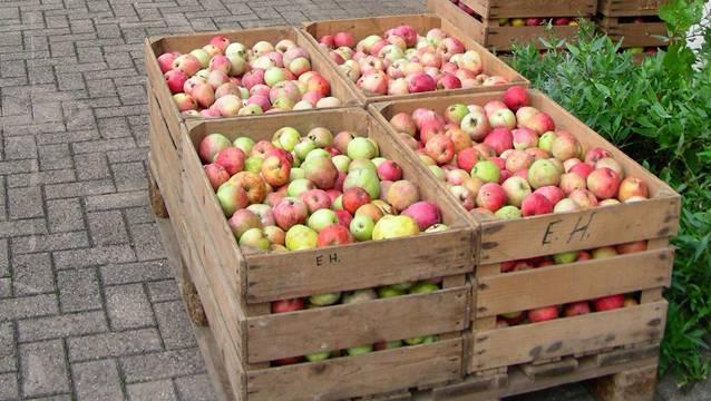 Die Rumänen kauften Äpfel und stahlen offenbar Geld und Schmuck der Verkäuferin.