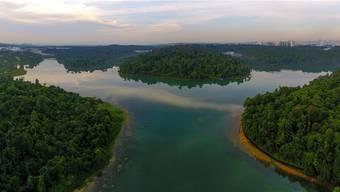 Der MacRitchie Reservoir Park ist einer von vier Naturreservaten Singapurs. Die saubere Grossstadt ist weit weg (hinten rechts). Shutterstock