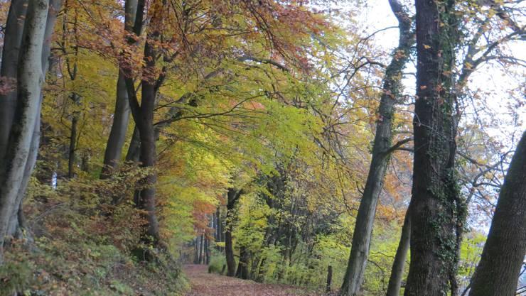 Hier immer noch der Herbst in seinen prächtigen Farben