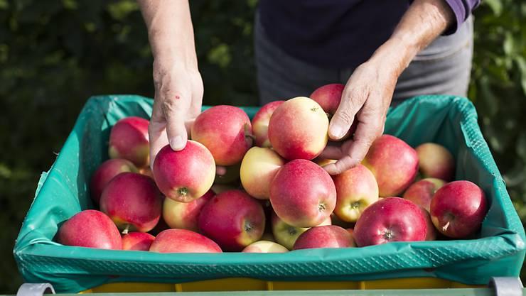 Um einen Engpass in der Apfelversorgung zu verhindern, lässt der Bund 8000 Tonnen Importäpfel zu. (Archiv)