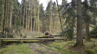 Noch ist hier der Weg versperrt, doch bis Ende Juni sollten laut FBRZ alle Waldstrassen wieder frei begehbar sein. zt