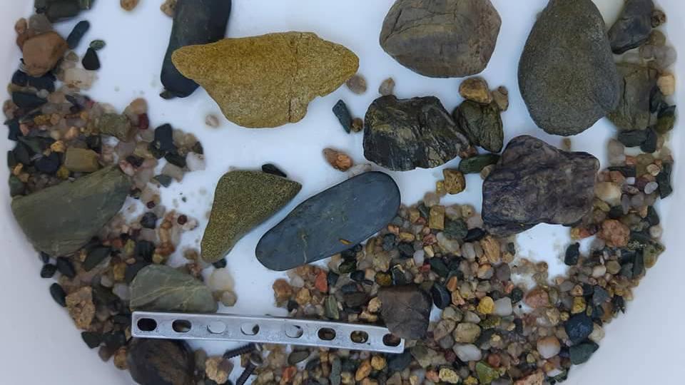 So eine Metallplatte wurde im Magen eines Krokodils gefunden.