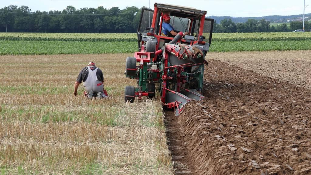 Traktor, Pflug, Acker: Bei der EM im Pflügen nimmt Mann es auf den Centimeter genau.