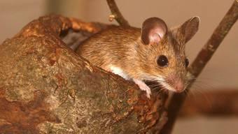 Mäuse, Vögel und Reptilien soll der Deutsche laut der Münchner Staatsanwaltschaft «unter erbarmungswürdigen Umständen» gehalten haben.