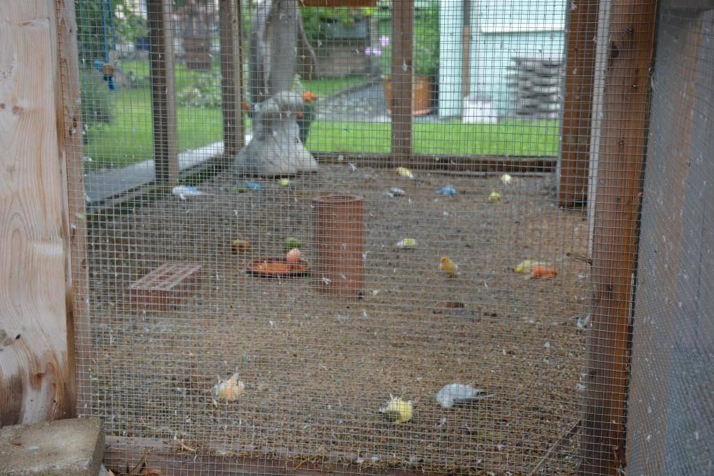 29 Vögel mussten ihr Leben lassen.