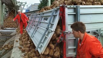 Schweizer Rübenzucker wird nachhaltiger produziert als brasilianischer Zucker (Archiv)