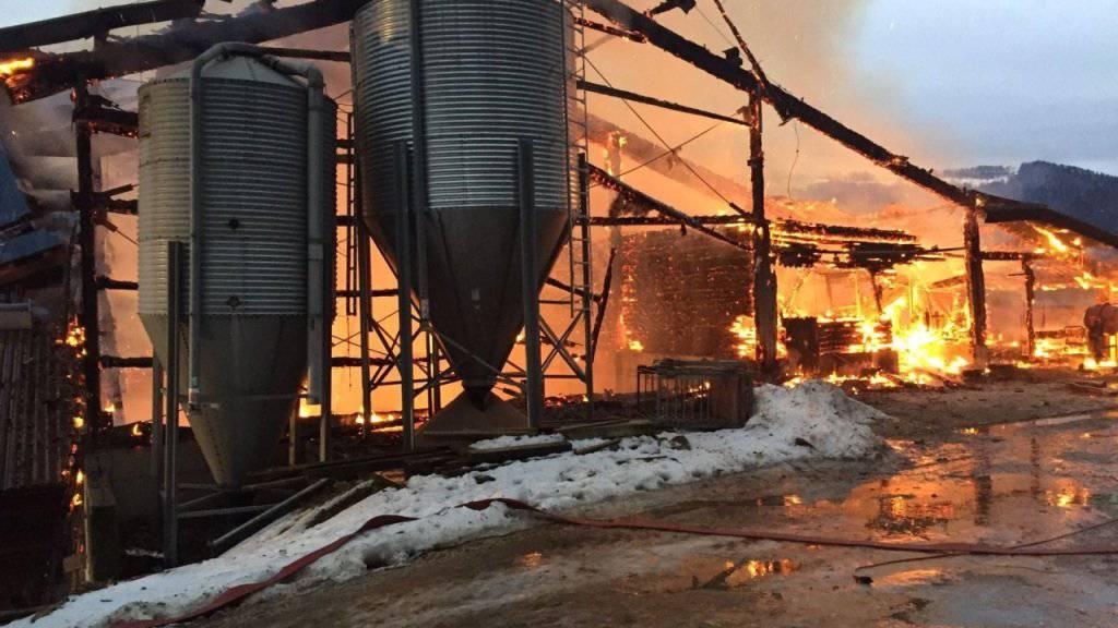In dem brennenden Stall in Seehof kamen nach ersten Schätzungen rund 300 Ferkel ums Leben.