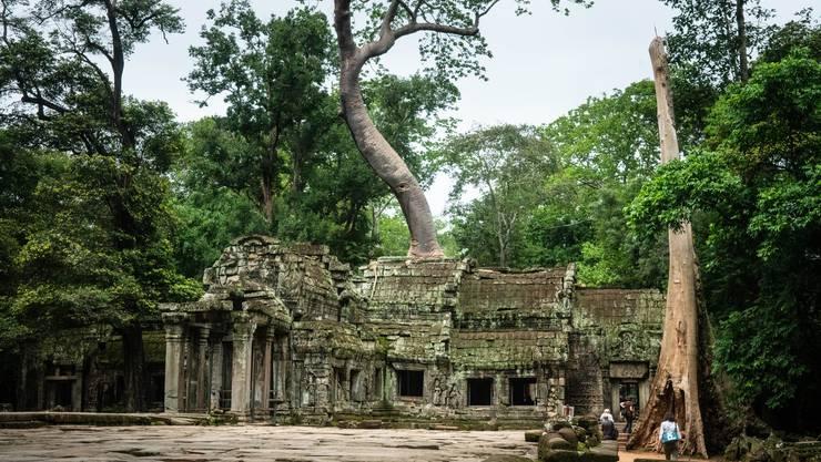 Ein herrliches Zusammenspiel zwischen Natur und der Tempelanlage Ta Prohm.