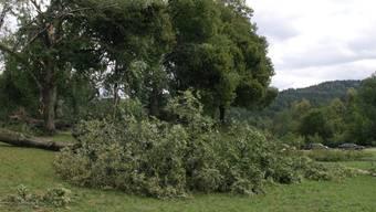Der Sturm im Aargau war weniger stark als erwartet. (Symbolbild)