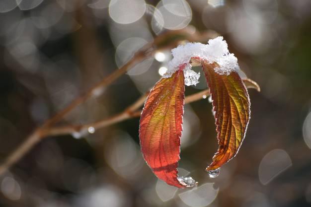 Winteranfang in Solothurn