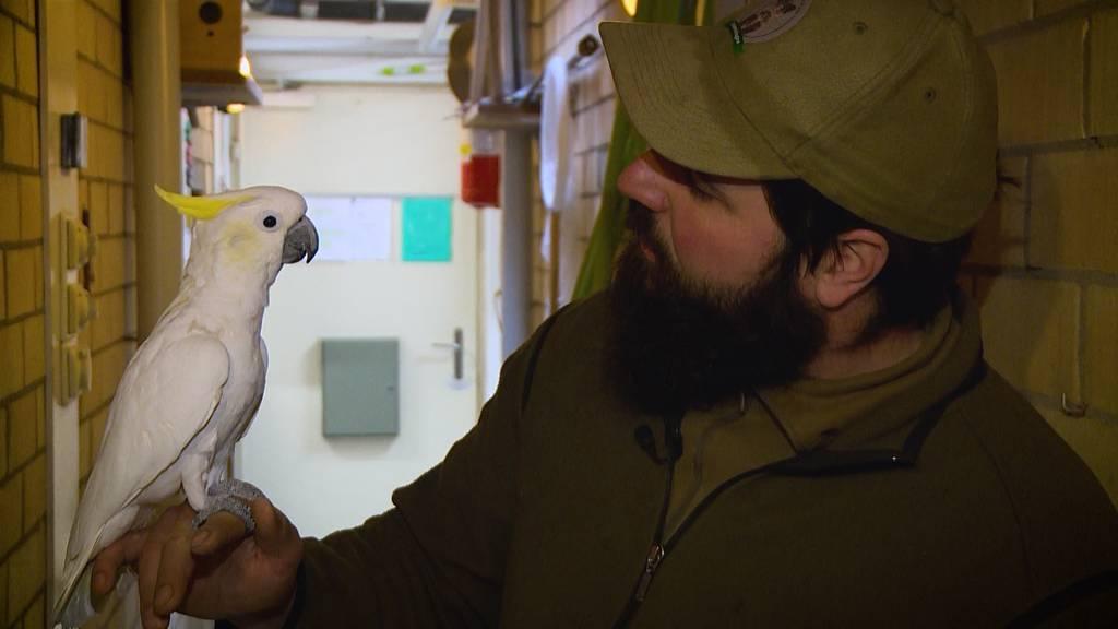 Tierisch exotisch: Walter und die Vögel