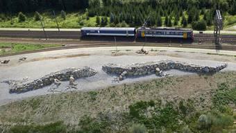 Die grössten Steinechsen der Welt