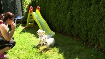In Rekingen wurden zwei Hunde mittels Köder vergiftet. Da der Täter nicht gefasst wurde, sorgen sich jetzt die Nachbarn um ihre tierischen Freunde.