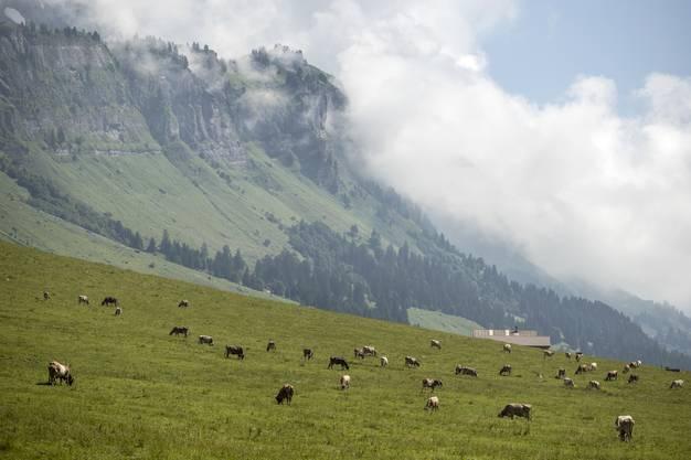 Damit ist er die grösste Kuhalp der Schweiz.
